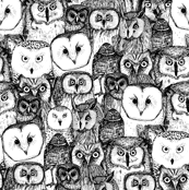 just owls black white
