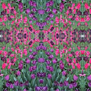 Mary's Tulips
