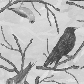 bnw_birds_to_print