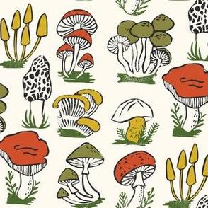 mushrooms // fungus forest woodland autumn fall nature botanical
