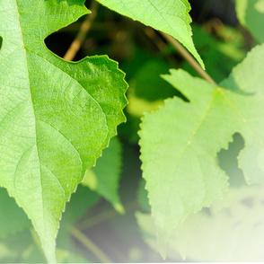 leaf_03R