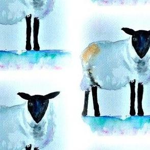 Lone Sheep off set