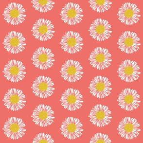 daisy daisies flowers blooms girls coral sweet