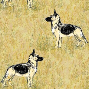 German Shepherd Dogs in Beige Field