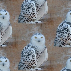 the snowy owl - large - potter's world