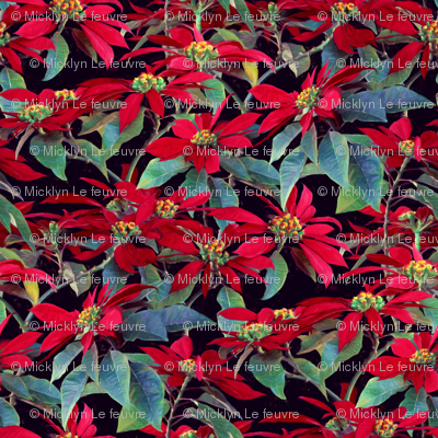 Vivid Red Poinsettia Christmas Flowers - small