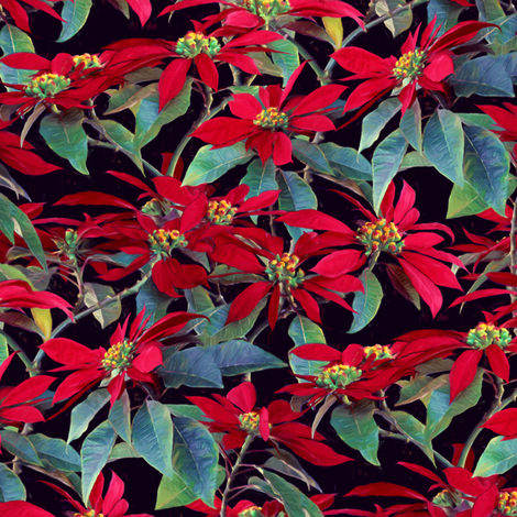 Vivid Red Poinsettia Christmas Flowers - small fabric by micklyn on Spoonflower - custom fabric