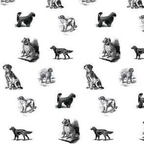 Regal dogs - vintage engravings