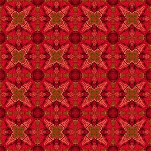 Red Fractal Star