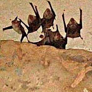 Oh, Bats!