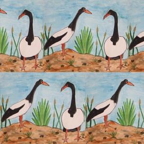2_magpie_goose