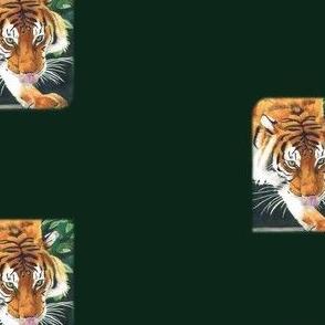 Tiger_Yummy