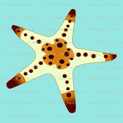 Sea Star 3