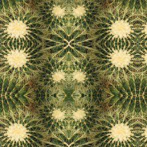 Cactus_Dream