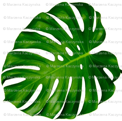 Monstera leaf, green, Palm tree, tropical, plants, summer, trendy || by sunny afternoon