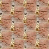 what's up, meerkat?
