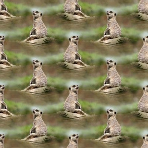 meerkat - oil painting effect