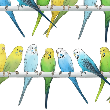 Rows of Colourful Budgies - larger scale fabric by hazel_fisher_creations on Spoonflower - custom fabric