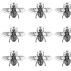 beetle_jpeg