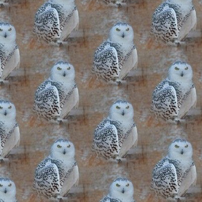 the snowy owl - medium - potter's world