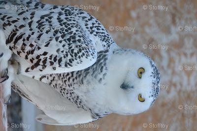 snowy owl - tea towel - potter's world