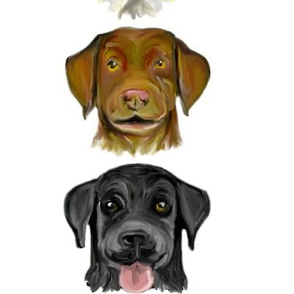 Custom Labrador Colors