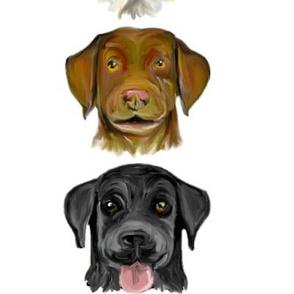 Custom Labrador Colors