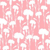 White_carnation_on_pink_shop_thumb