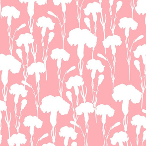 white_carnation_on_pink