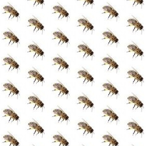 Bee_on_white