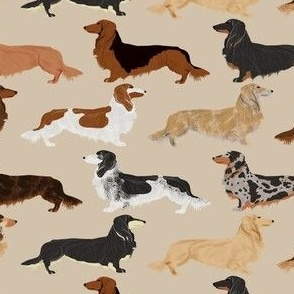 long haired dachshunds dogs pet dog cute pets weenie dogs sausage dog pets dog