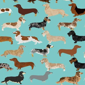 dachshunds long haired smooth doxie wire haired dachshunds cute dogs