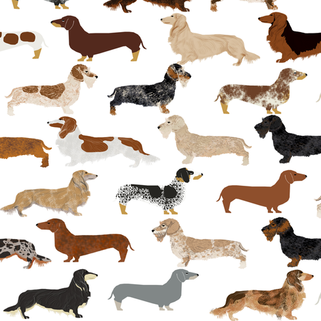 smooth wire haired long haired dachshunds dogs pets  fabric by petfriendly on Spoonflower - custom fabric
