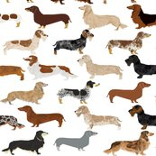 Rall_doxie_white_shop_thumb