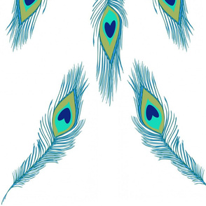 Peacock feathers 3