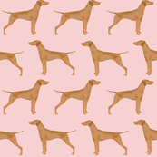 vizsla dog dogs cute dog fabric pet vizslas dog fabrics
