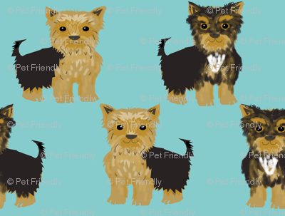 yorkie yorkshire terrier cute dog dogs pets pet dog