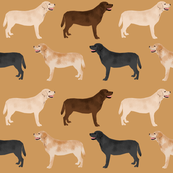 labrador retrievers dogs cute yellow lab chocolate lab black lab labrador fabrics for lab owners preppy cute lovely dogs