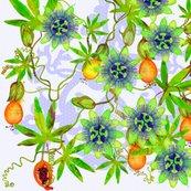 Rrterepassifloraprincipal0smallscale_shop_thumb