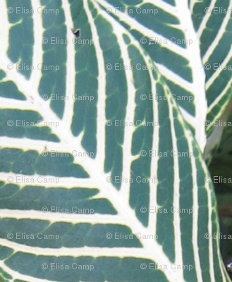 Tropical Stripe - vertical