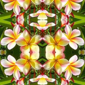 frangipani in the mirror - large