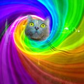 Kitty Vision