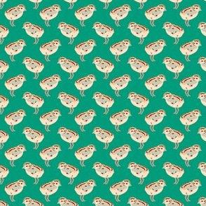 little chicks on green