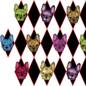 Harlequin_French_Bulldogs_150_resolution