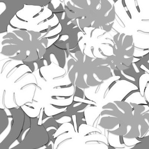 Grey and white monstera leaves