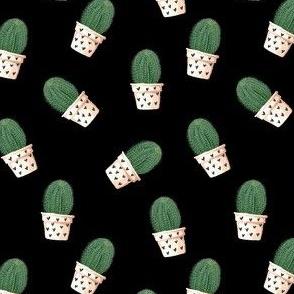 cacti on black ground