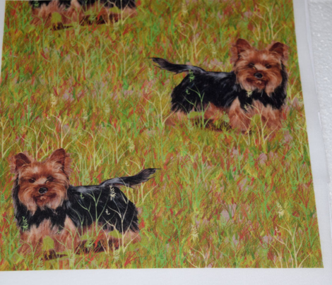 Yorkshire Terrier in Grassy Field