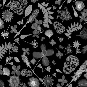 ferns and skulls dark floral gothic