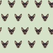 Chihuahuas // Jade