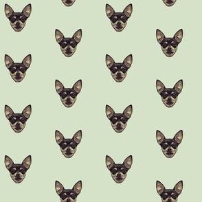 Chihuahuas // Light Green